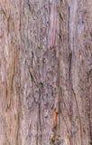 Textura del ciprés calvo Imagen de archivo