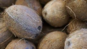 TEXTURA DEL COCO en granja orgánica Muchos o montón de cocos sabrosos frescos fotos de archivo libres de regalías