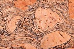 Textura del corcho Imagen de archivo