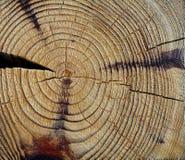 Textura del corte de madera imagenes de archivo