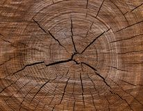 Textura del corte del árbol 2 Fotografía de archivo