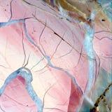 Textura del corte pulido del jaspe Imagen de archivo