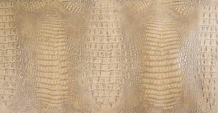 Textura del cuero de Tan Colored Embossed Gator Back Fotos de archivo libres de regalías