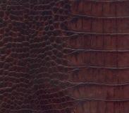 Textura del cuero del cocodrilo de Brown Imagen de archivo libre de regalías