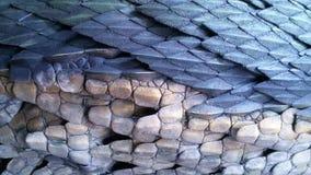 Textura del cuero del dragón Fotografía de archivo libre de regalías