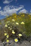 Textura del desierto Imagen de archivo