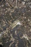 Textura del detalle de la cabaña de madera Imagen de archivo