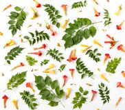 Textura del estampado de flores con las hojas, los brotes y las flores aislados Imágenes de archivo libres de regalías