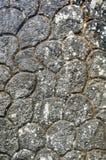 Textura del extracto del grunge de la pared de piedras del modelo del cemento Fotografía de archivo