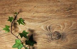 Textura del fondo con la rama verde de la hiedra imagen de archivo