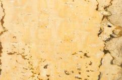 Textura del fondo de la corteza de abedul Imagen de archivo libre de regalías
