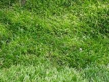 Textura del fondo de la hierba verde fresca de la primavera Imágenes de archivo libres de regalías