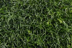 Textura del fondo de la hierba verde Textura del fondo natural Fotos de archivo