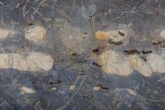 Textura del fondo de la pared Foto de archivo libre de regalías