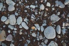 Textura del fondo de la piedra y de la alga marina del adoquín Imagenes de archivo