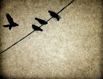 Textura del fondo de la vendimia de los pájaros Foto de archivo libre de regalías