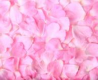 Textura del fondo de pétalos color de rosa rosados delicados hermosos Fotografía de archivo