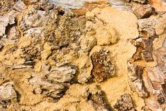 Textura del fondo de un montón de la termita. Fotos de archivo libres de regalías