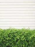 Textura del fondo de una pared blanca con las lineas horizontales paralelas y las plantas verdes Imagenes de archivo