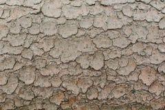 Textura del fondo del fango agrietado secado fotos de archivo