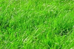 Textura del fondo del prado de la tierra de la hierba Fotografía de archivo