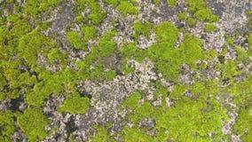 Textura del fondo del verde de musgo Foto de archivo libre de regalías