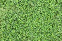 textura del fondo natural de la hierba verde Foto de archivo libre de regalías