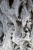 Textura del grano y del nudo del Driftwood Imagen de archivo libre de regalías