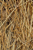 Textura del heno Fotografía de archivo libre de regalías