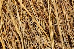 Textura del heno Foto de archivo libre de regalías