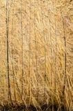 Textura del heno Imagen de archivo
