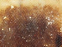 Textura del hexágono del fondo, panal de la cera Foto de archivo