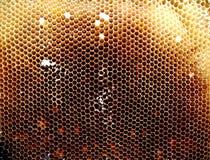 Textura del hexágono del fondo, panal de la cera Fotografía de archivo libre de regalías