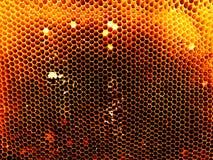 Textura del hexágono del fondo, panal de la cera Fotografía de archivo