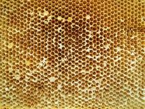 Textura del hexágono del fondo, panal de la cera Imagenes de archivo