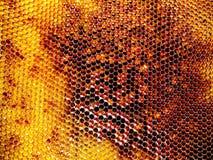 Textura del hexágono del fondo, panal de la cera Imágenes de archivo libres de regalías