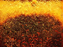 Textura del hexágono del fondo, panal de la cera Fotos de archivo