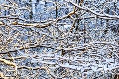 Textura del invierno del bosque en la puesta del sol Árboles nevados en bosque del invierno del bosque del invierno con los árbol Imagen de archivo libre de regalías