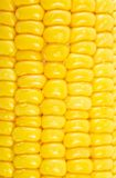 Textura del maíz fotografía de archivo