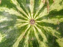 Textura del melón Foto de archivo libre de regalías