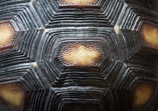Textura del modelo de la cáscara de la tortuga Foto de archivo libre de regalías