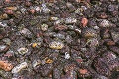 Textura del modelo de las piedras redondas del musgo fotografía de archivo libre de regalías