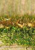 Textura del musgo en una cerca vieja como fondo (foco en musgo) Foto de archivo libre de regalías