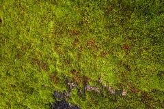 Textura del musgo, fondo con el espacio de la copia Imagen de archivo