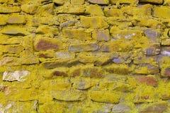 Textura del musgo, fondo de piedra - imagen común Imagenes de archivo