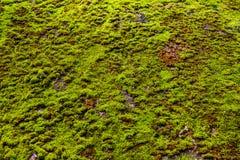 Textura del musgo verde en piso concreto Foto de archivo