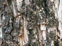 Textura del musgo y de la corteza Fotografía de archivo
