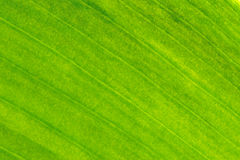 Textura del oro de la hoja Imagenes de archivo