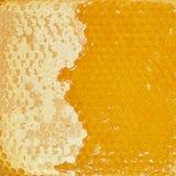 Textura del peine de la miel Fotografía de archivo libre de regalías