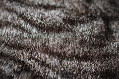 Textura del pelo del gato Fotografía de archivo libre de regalías
